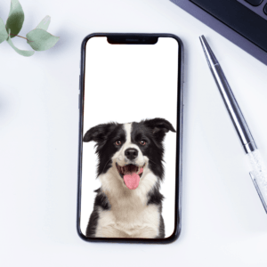 app that controls dogs